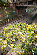 A community garden project built on the platform of a disused railway line in the centre of Paris, France