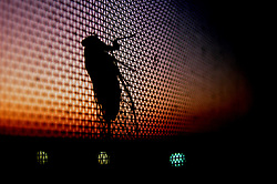 Cicala al tramonto su zanzariera
