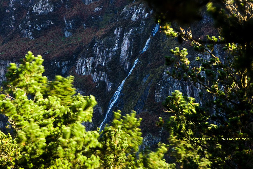 The impressive waterfall cascades down the cold and shadowy cliffs of Y Graig Ddu, whilst a bitter autumn wind buffets the still-lush pine trees in an intense early-morning sunlight.
