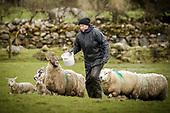 Rose McDonnell - Farmers Journal
