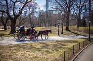 NEW YORK  2020V10<br /> <br /> Hästskjuts i Centra Park, en verksamhet som kritiseras av djurrättsaktivister och under vår vistelse visades filmklipp på TV på hur djuren misshandlas.<br /> <br /> Foto: Per Danielsson/Projekt.P