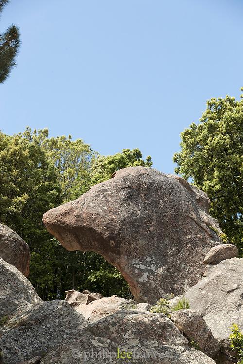 Close up of dog head shaped rock, Calanches of Piana, Corsica, France