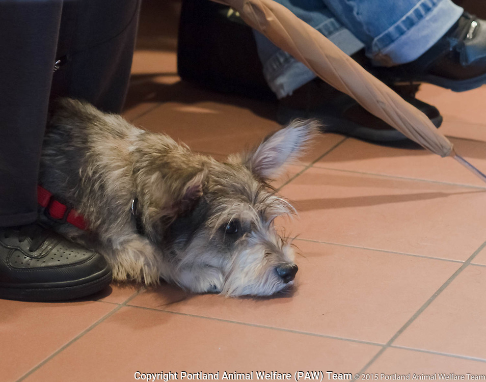 Lonely little dog waits with owner a clinic for pets of the homeless