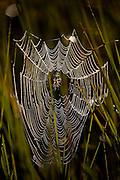 Aquidauana_MS, Brasil...Detalhe de uma teia de aranha na fazenda Rio Negro no Pantanal...The spiderweb in Rio Negro farm in Pantanal...Foto: JOAO MARCOS ROSA / NITRO