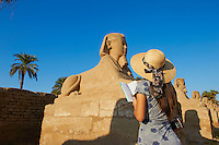 Afrique du Nord, Egypte, Louxor, Temple de Louxor, Patrimoine mondial de l'UNESCO, Vallée du Nil, rive gauche du Nil, allée des Sphinx, touriste devant la statue de Sphinx // Africa, Egypt, Louxor, Temple of Luxor, World Heritage of the UNESCO, east bank of the river Nile, Sphinx path, tourist
