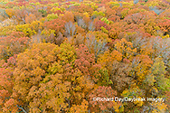 63876-02305 Aerial view of fall color trees Stephen A. Forbes State Park Marion Co. IL