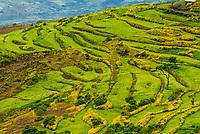 Landscape near Blue Nile Gorge, Oromia region, Ethiopia.