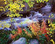 Fall Colors along Lee Vining Creek, Mono Basin National Forest Scenic Area, California
