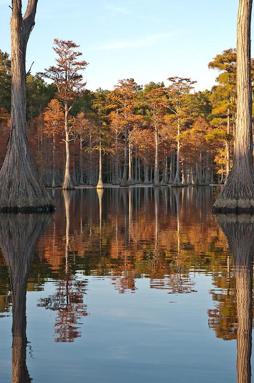 Cypress Reflection 2