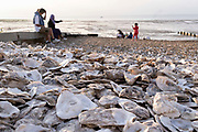 Staycationers enjoying the calm of a low-tide evening, sit on the beach near discarded oyster shells, on 25th July 2021, in Whitstable, Kent, England.