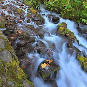 Wahkeena Lower Waterfalls - Columbia Gorge, Oregon