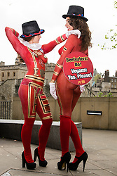 "© Licensed to London News Pictures. 22/04/2014. London, UK. Two female PETA demonstrators with their bodies painted to look like ""Beefeaters"" (Yeoman Warder) stand outside the Tower of London asking people to give up eating meat. The campaign has been timed to fall one day before St George's Day. Photo credit : Vickie Flores/LNP"