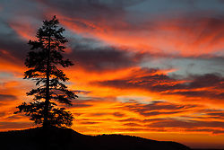 """""""Blackwood Canyon Sunset 1"""" - Photograph taken in Tahoe's Blackwood Canyon of a pine tree and mountain silhouette with a beautiful fiery orange and yellow sunset background."""
