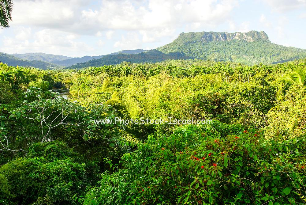 the flat top table top El Yunque mountain, Cuba