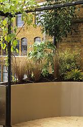 Raised metal planter on roof terrace with grapevine growing over pergola. Design: Diarmuid Gavin