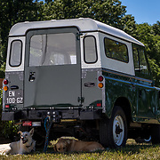 Dogs in the shade under a Land Rover Defender.