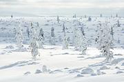 Warm Light | Saariselkä, Finland