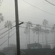 View through a window screen and rain of rows of palm trees, roof tops and power lines..