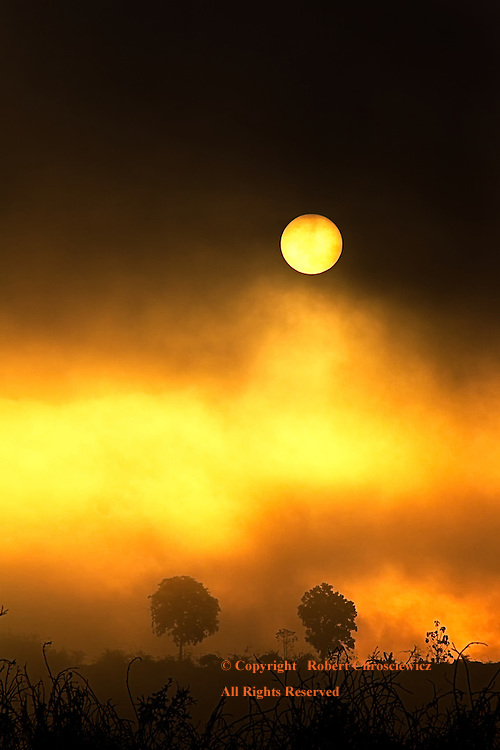 Ominous Sun: This surrealistic scene has the sun breaking through a dark fog bank, casting the trees and plant life as silhouettes, Khao Laem Reservoir, Sangkhlaburi Thailand.