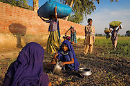 The Sindh region of southern Pakistan is dry and very hot.  It is dotted with remote villages and traditional people.  Agriculture requires the entire family's help in order to produce a crop.