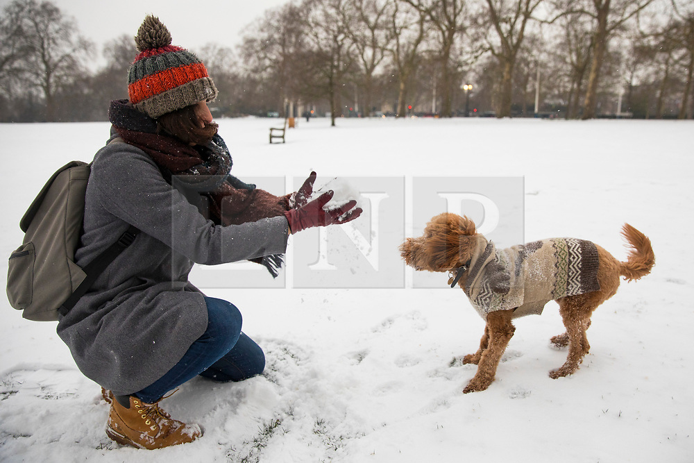 © Licensed to London News Pictures. 01/03/2018. London, UK. Pico the Cockapoo gets ready to catch a snowball in St James Park as severe weather continues in the capital. The 'Beast from the East' and Storm Emma have brought extreme cold and heavy snow to the UK. Photo credit: Rob Pinney/LNP