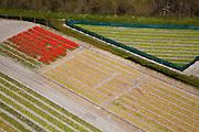 Nederland, Zuid-Holland, Gemeente Noordwijk, 16-04-2008; ten Noorden van Noordwijkerhout, Polder Het Langveld; bollenstreek, percelen met bollen, gedeeltelijk in  bloei; zandgrond, bollenveld, geestgrond, bloementeelt, bollenteelt, narcis, bol, hyacint*, patroon,ritme, kleur, abstract; aerial photo, bulbs, flower bulb, flowerbed , bulbfields, bloom, flowering time, toerism, attraction..luchtfoto (toeslag); aerial photo (additional fee required); .foto Siebe Swart / photo Siebe Swart