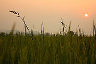 The sun sets over a rice field, Vietnam, Southeast Asia