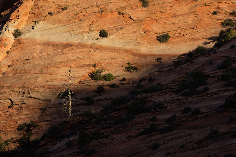 http://Duncan.co/dead-tree-on-zion-slope