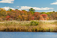 The Wertheim National Wildlife Refuge is located on the south shore of Long Island and is one of the undeveloped estuary systems on Long Island, Shirley, NY