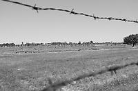 Holocaust Memorial Day 2021 in United Kingdom photos taken at Auschwitz-Birkenau june 6 2018  photo by Krisztian Elek