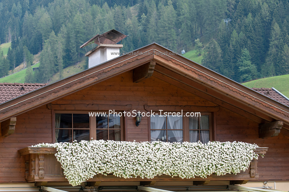 White flowers in window boxes in the facade of a typical Tirolian house. Photographed in Neustift, Tirol, Austria