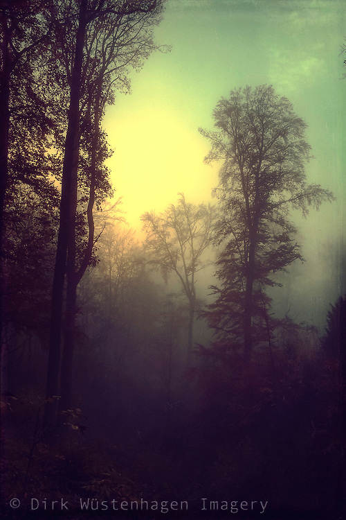 Dawn on a misty fall day - textured photograph