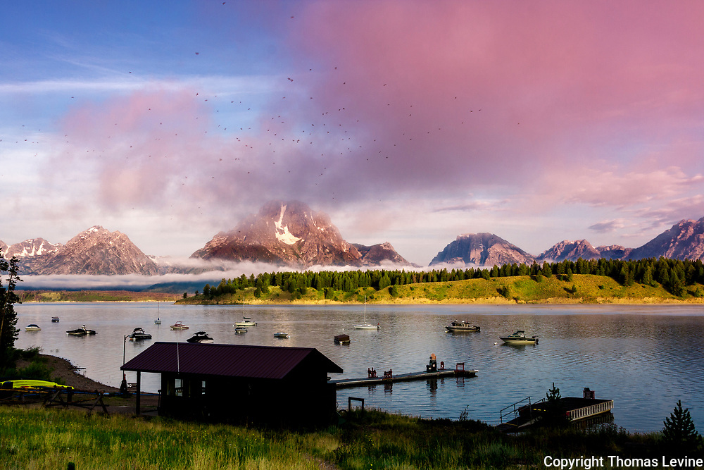 Aug 2014, Grand Teton National Park: Flying around the fog, the birds above the lake and boat house at Signal Mountain in Grand Teton.