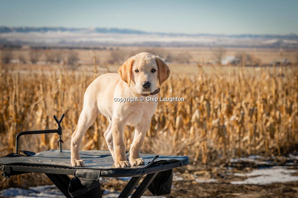 dog, stock, photography, photo, image,