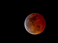 Total Lunar Eclipse of January 20, 2019, sometimes called the Super Blood Wolf Moon - Super because it was near its perigee and appeared larger than usual; Blood for the color during totality; and Wolf for the traditional name of the first full moon of the year. Photographed at the last moment of totality, as the Moon started to emerge from the Earth's shadow, at 9:45 pm Pacific Standard Time in Berkeley, California, USA
