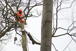 Wendover, UK. 28th April, 2021. A tree surgeon working on behalf of HS2 Ltd fells a tree for the HS2 high-speed rail link in ancient woodland at Jones Hill Wood in the Chilterns AONB. Felling of the woodland which contains resting places and/or breeding sites for pipistrelle, barbastelle, noctule, brown long-eared and natterer's bats has recommenced after a High Court judge yesterday refused campaigner Mark Keir permission to apply for judicial review and lifted an injunction on felling.