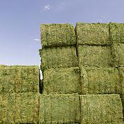 Jerry Tlucek Dairy Farm, Roundup Ready ® alfalfa (Medicago sativa) bales