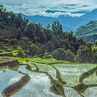 Rice paddies gleam in the Marsyandi River Valley of Nepal.