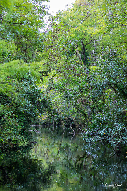 August 11: Images from the 27 mile drive along Loop Road in Big Cypress Wildlife Preserve in Florida.