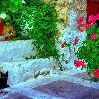 Black cat is surrounded by colourful plants and flowers. Medieval town of Mesta. Chios. Greece. The pentagon shape and fortifications of the town has its roots back to the 14th century when the city was ruled by the Genoese.
