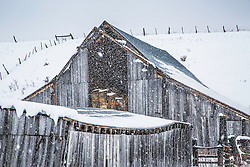Old barn, snowstorm, Star Valley, Wyoming