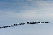 Row of trees in winter landscape at Swinbrook in The Cotswolds, England<br /> FINE ART PHOTOGRAPHY by Tim Graham