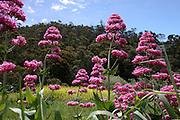 Hobart, Tasmania, Australia A garden