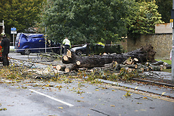 © Licensed to London News Pictures. 02/10/2020. London, UK. Workmen clear a fallen tree after it hit a van and blocked traffic on Kingston Hill in south west London in wet and windy conditions. The south is due to feel the effects of Storm Alex over the next few days with 90mph winds and heavy rain forecast. Photo credit: Peter Macdiarmid/LNP