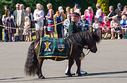 Balaklava Company, The Argyll and Sunderland Highlanders, 5th Battalion The Royal Regiment of Scotland and their official mascot, a Shetland pony named Cruachan, take part in the Ceremony of the Keys at  Holyroodhouse on July 2, 2018, where the Queen is symbolically offered the keys to the city of Edinburgh by the Lord Provost.