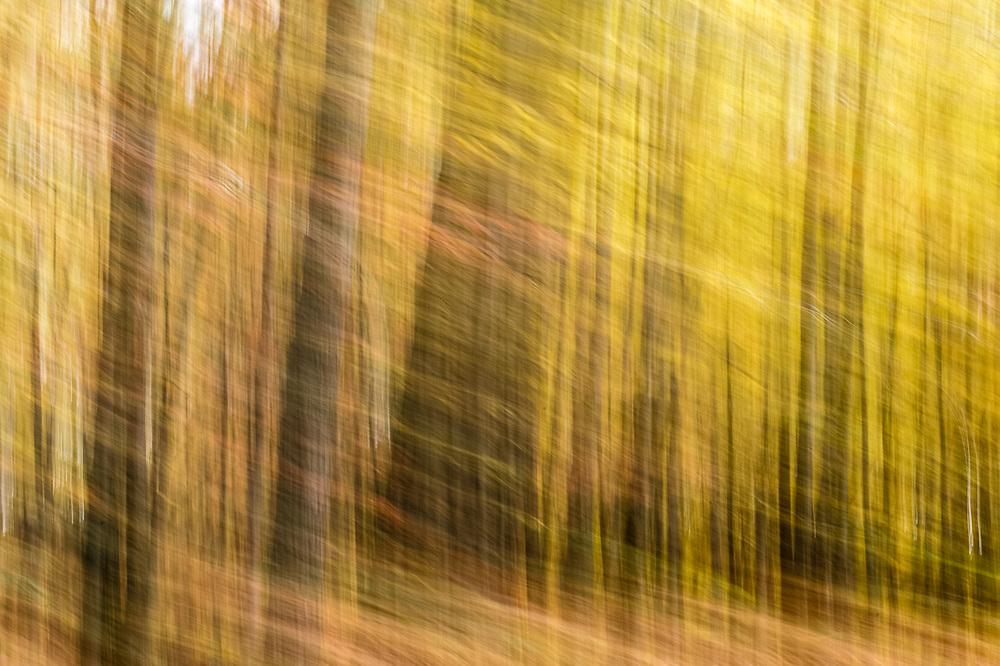 Autumn impresionism, motion blur, overcast light, October, Crawford County, Michigan, USA
