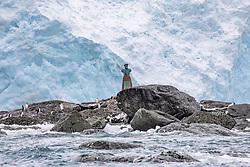 Buste of Captain Luis Pardo. Chinstrap Penguins, Point Wild, Elephant Island