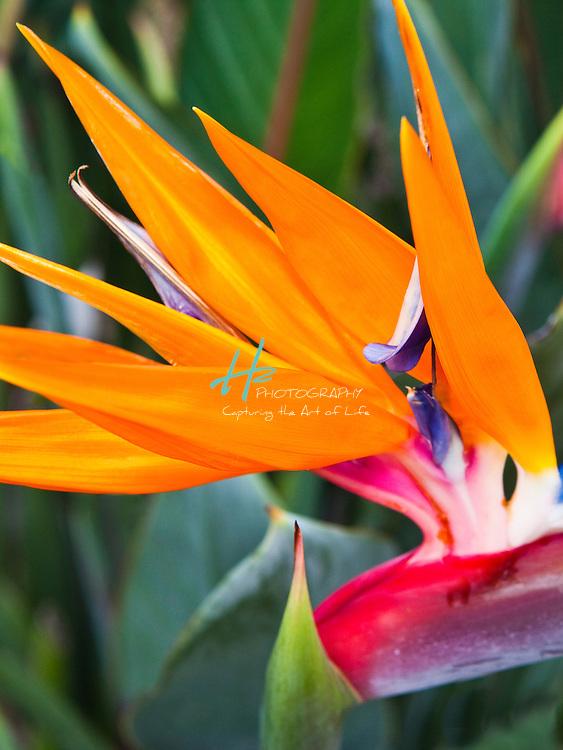 .H2 Photography | www.h2photography.biz | 602.717.4991