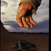 """The grime of a veteran sheepherder coats Shone Holiday's gnarled hands.  """"Herding sheep keeps you in shape,"""" he says."""