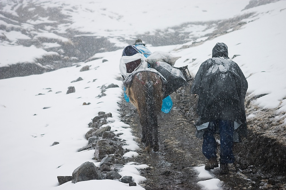 Two men and a mule hike through a blizzard near a high pass in the , Andes Mountains, Peru, en route to the herding village of the Q'eros people.